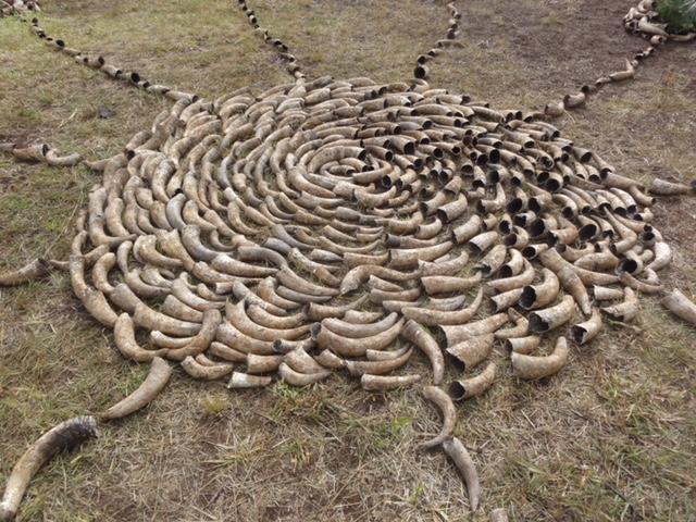 Cow horn mandala